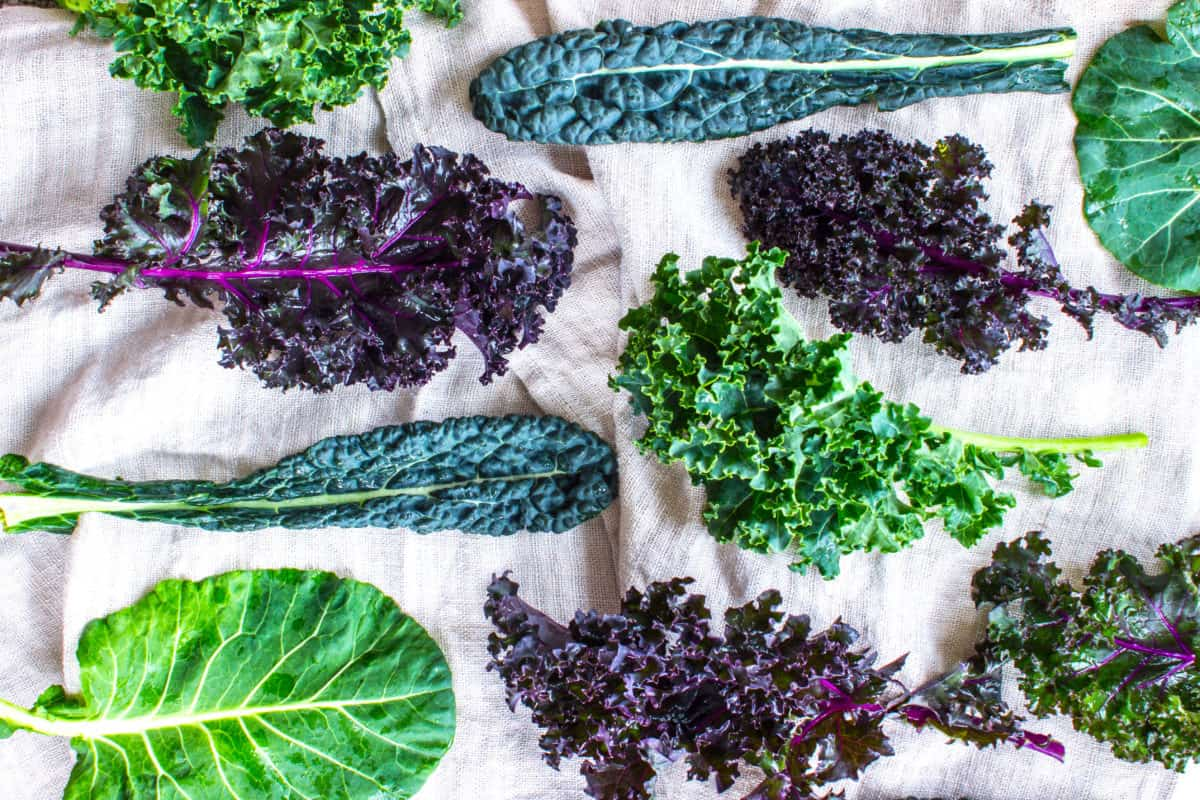 How to Go Vegan (10 Easy Steps). Image shows various different coloured kale and collard leaves on a linen background.
