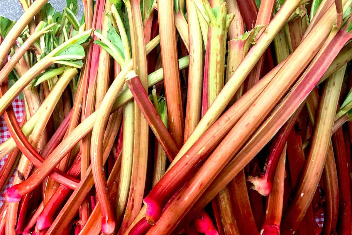 Overhead image of many stalks of rhubarb on a checked surface.
