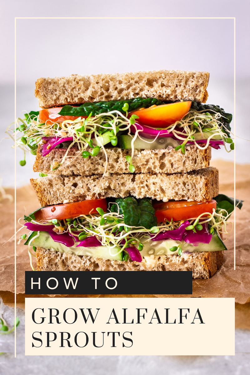 Pin for How to Grow Alfalfa Sprouts by Vancouver with Love. Image shows sandwich stacked with sprouts and mixed colourful vegetables.